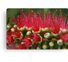 Bottle Brush II Canvas Print