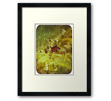 Grunge butterfly background 2 Framed Print