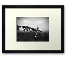 Antinori Vine Framed Print