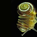 Snail by JamieP