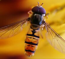 HoverFly by JamieP