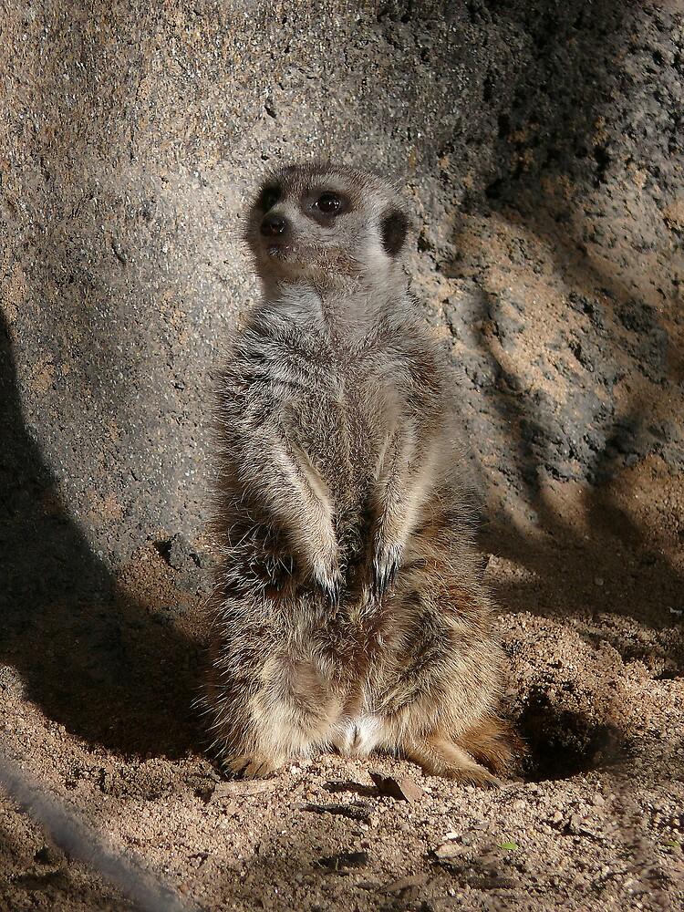 Meerkat by eclectic1