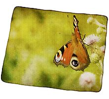 Grunge butterfly background 4 Photographic Print