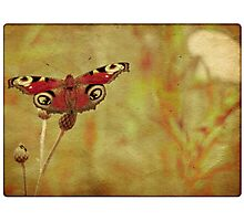 Grunge butterfly background 3 Photographic Print