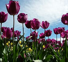 Towering Tulips by Adelia