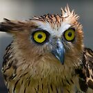 Buffy Fish-owl by byronbackyard