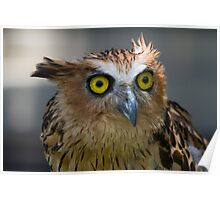 Buffy Fish-owl Poster