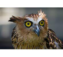 Buffy Fish-owl Photographic Print