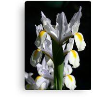Aligned Irises Canvas Print
