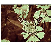 Grunge butterfly background 7 Photographic Print