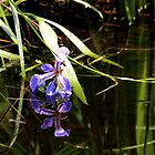 the Pond the Lily and the Frog by nastruck
