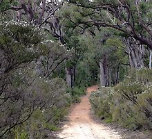 The Walk to Goblin Swamp, near Pemberton, Western Australia by Maureen Smith