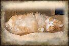 BobCat Asleep by MotherNature
