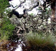 Goblin Swamp, near Pemberton, Western Australia by Maureen Smith