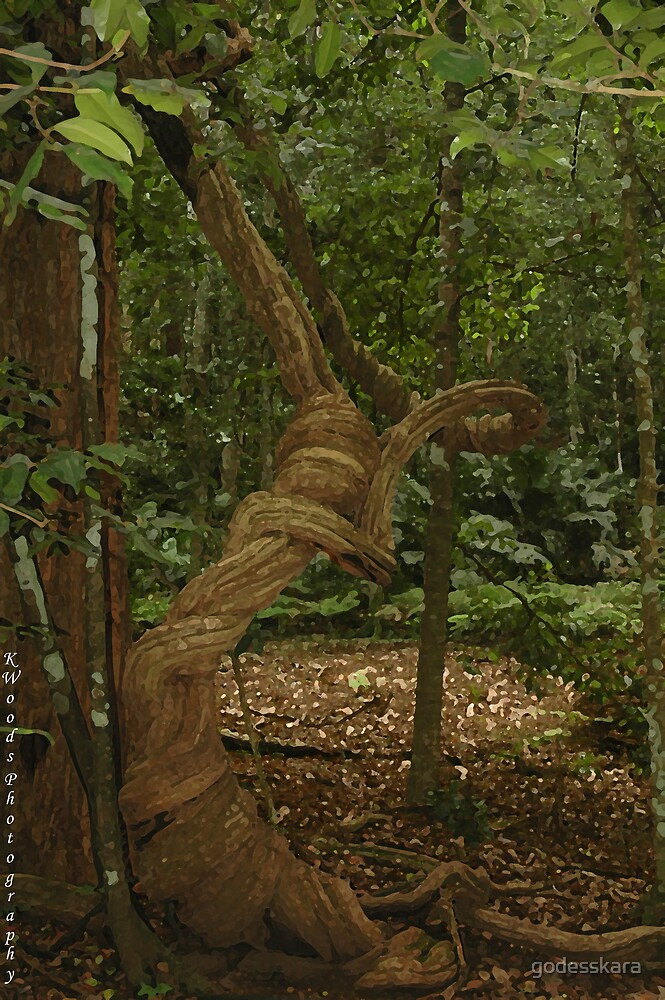 Twisted Tree by godesskara