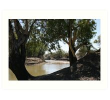 River Red Gums on The Darling River Upstream From Bourke. Art Print