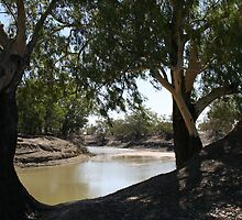 River Red Gums on The Darling River Upstream From Bourke. by Ross Campbell