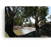 River Red Gums on The Darling River Upstream From Bourke. Canvas Print