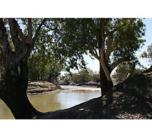 River Red Gums on The Darling River Upstream From Bourke. Photographic Print