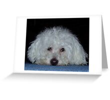My dog Bosun in a pensive mood Greeting Card