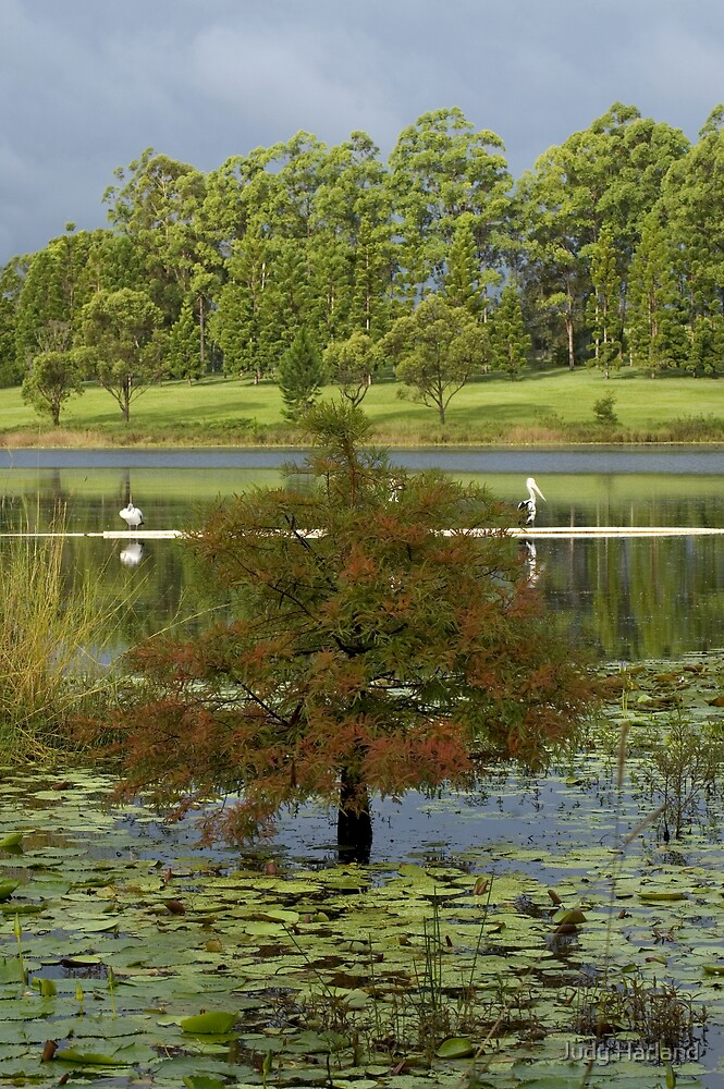 Lake MacDonald, Cooroy by J Harland