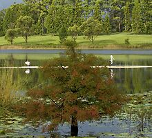 Lake MacDonald, Cooroy by Judy Harland