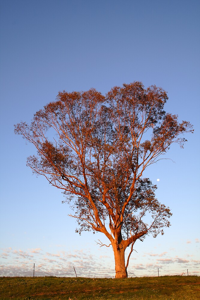 Late afternoon in Australia by David Haviland