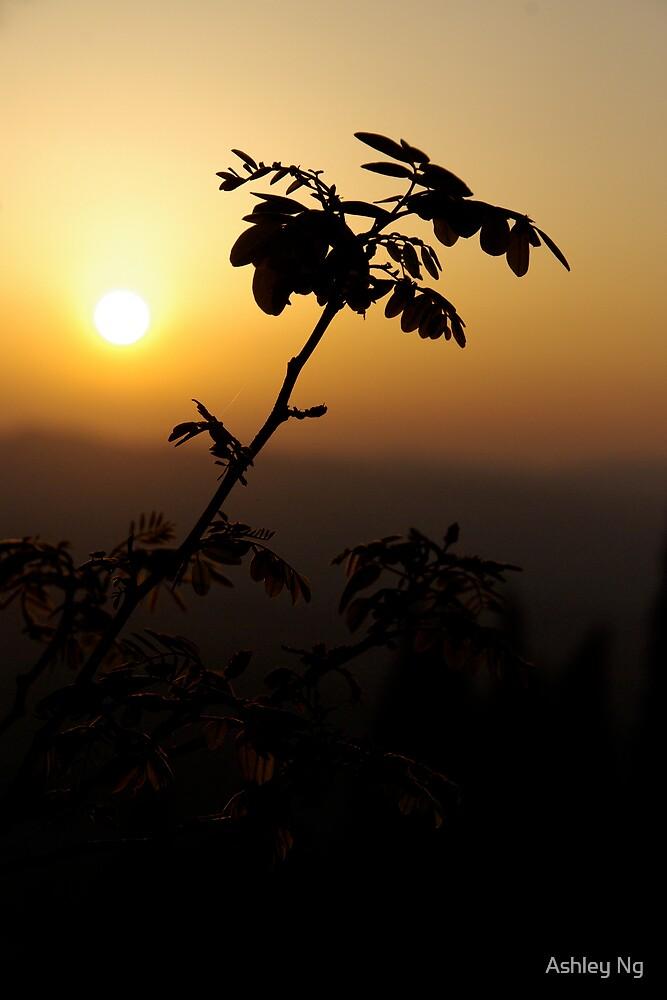 Tuscan Sunset IV by Ashley Ng