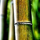 Big Bamboo by Bob Wall