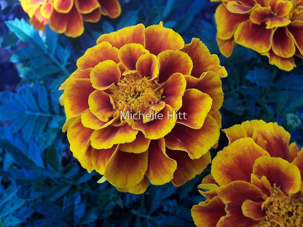 Marigold by Michelle Hitt