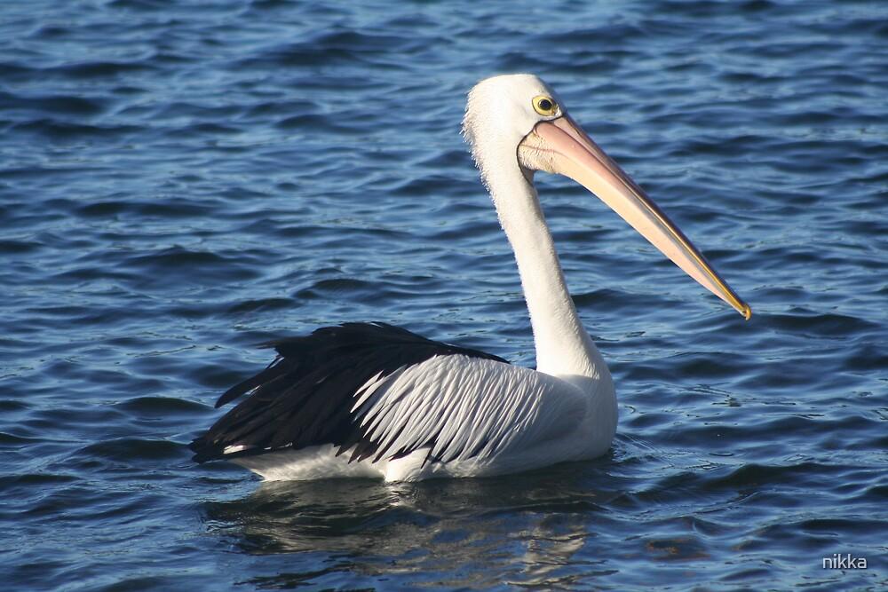 pelican by nikka