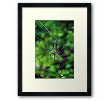 The Exotic Spider IV - Hong Kong. Framed Print