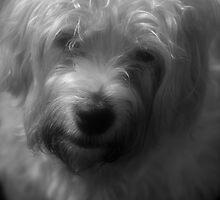My dog Bramble/////////// by Arthur Chambers