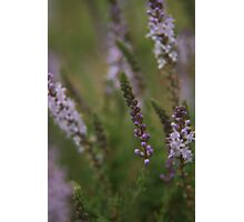 """No, it's not Lavender... """"Wild Flowers"""" Free State, South Africa Photographic Print"""