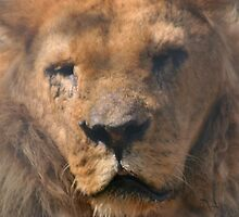 The Lion of Judah by Alfy