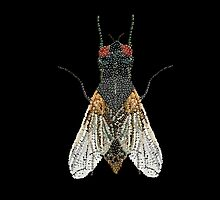 Bedazzled House Fly / black background by Roger Swezey