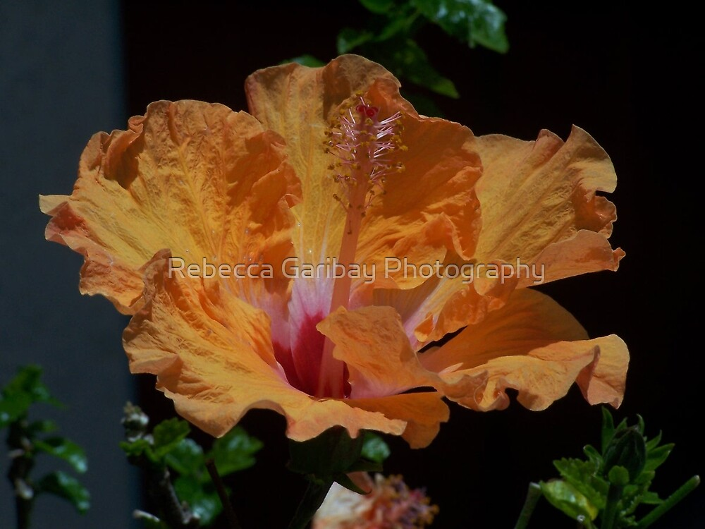 orenge spectacular by Rebecca Garibay Photography