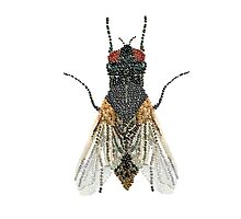 Bedazzled House Fly / transparent background by Roger Swezey
