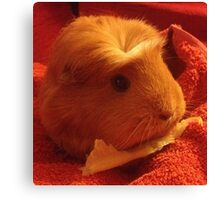 Brenda the Guinea Pig Canvas Print