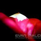 Natasha 15 by Evan Malcolm