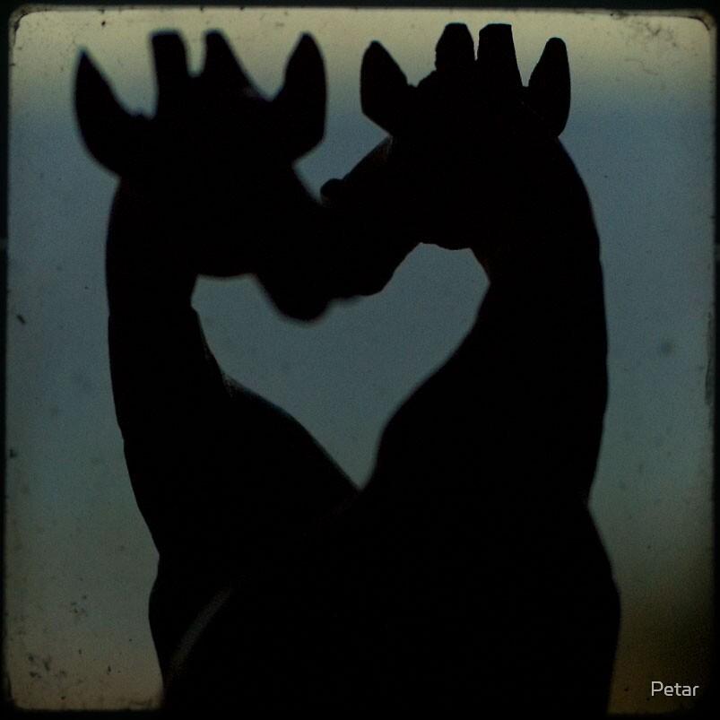 giraffe rendezvous by Petar