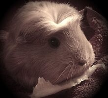 Brenda the Guinea Pig (Old Style) by guineapiglove