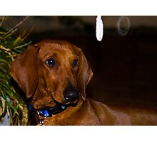Concerned Sausage Photographic Print