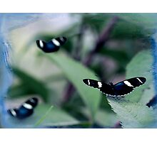 The butterflys Photographic Print