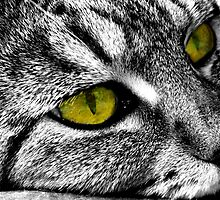 Yellow Eyed Monster by Boadicea