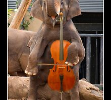 Cellophant by Gerard Delany