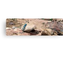 Technicolour Lizard Canvas Print