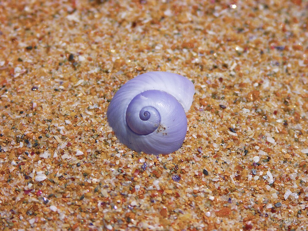 She Sells Sea Shells by wondawe