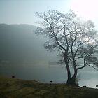 Misty lake by Tanya Housham
