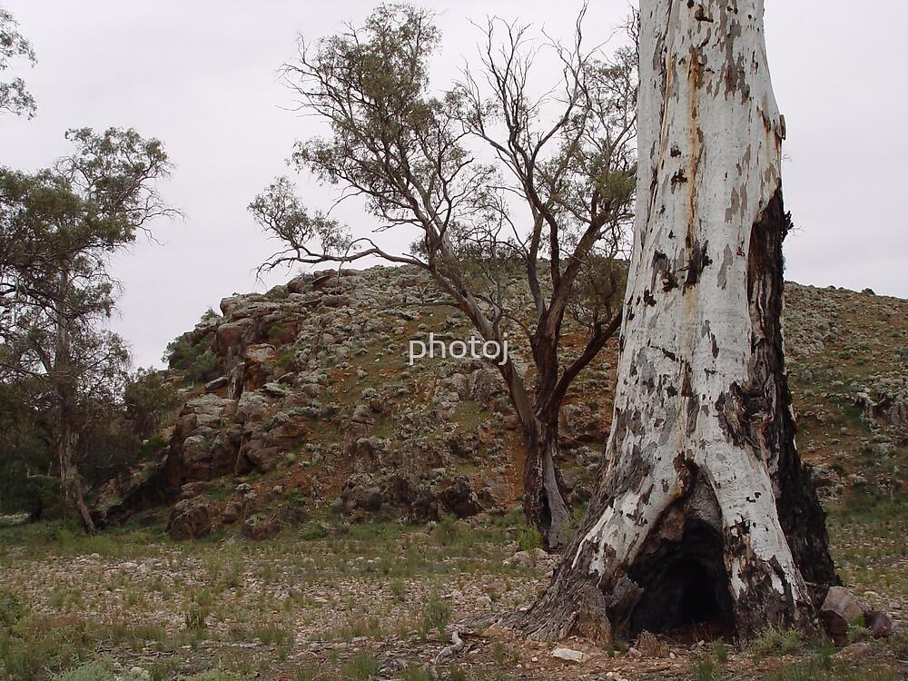 South Australia Flinders Rangers by photoj